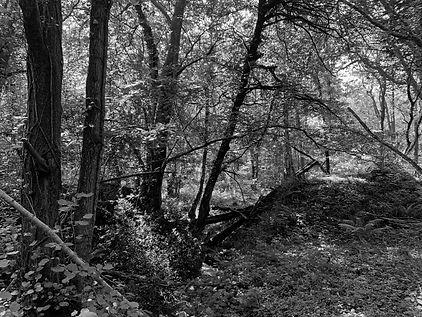 Medd Forest4.jpg