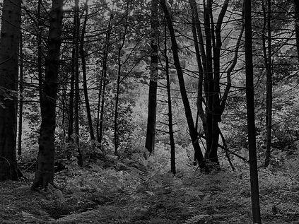 Medd Forest 1.jpg