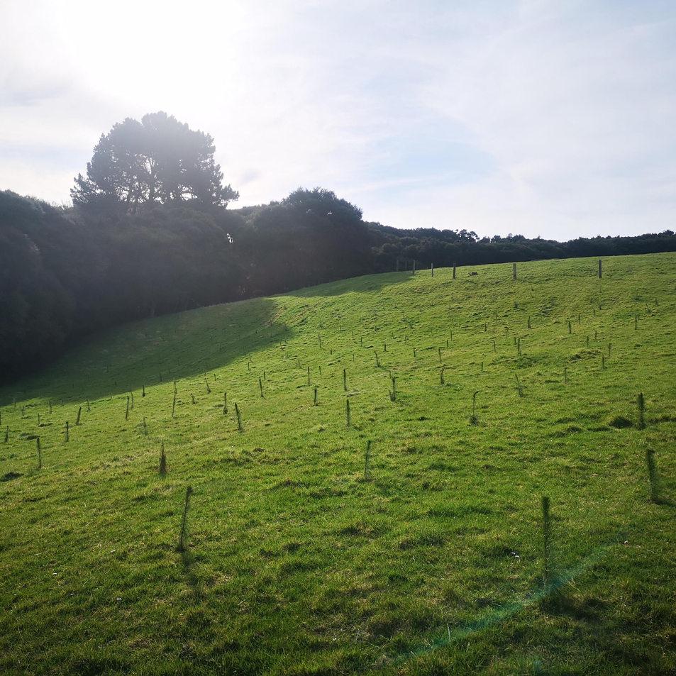 tree farm rows sept 2020.jpg