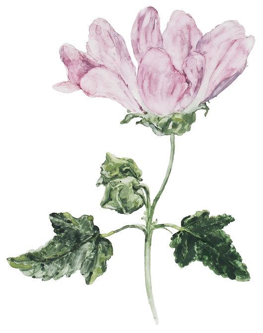 Summer Forest Rose