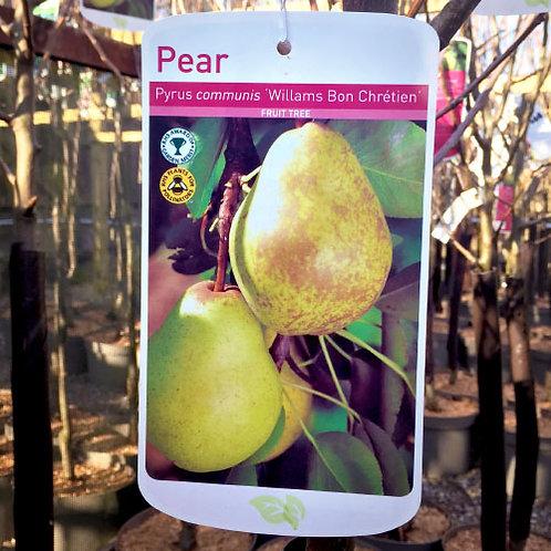 Pear William Bon Chretien