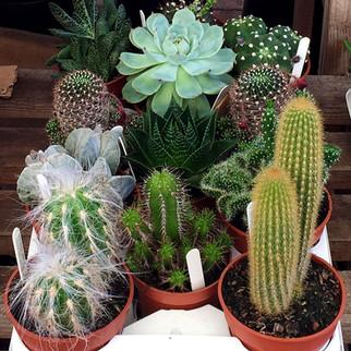 cacti13.jpg