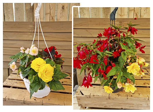 hangingbaskets.png