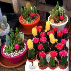 cacti05.jpg