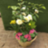 potplant2.jpg