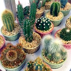 cacti20.jpg