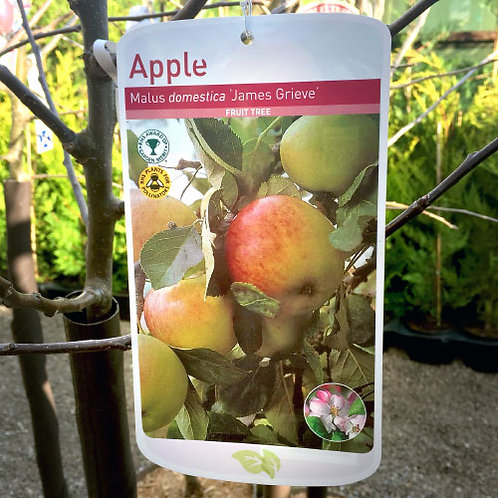 Apple James Grieve