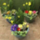 potplants.jpg