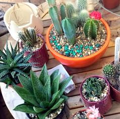 cacti21.jpg