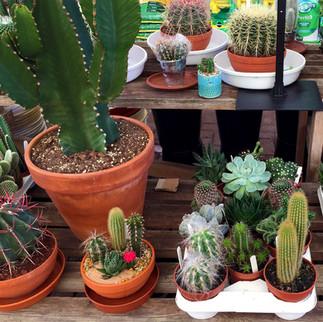cacti14.jpg