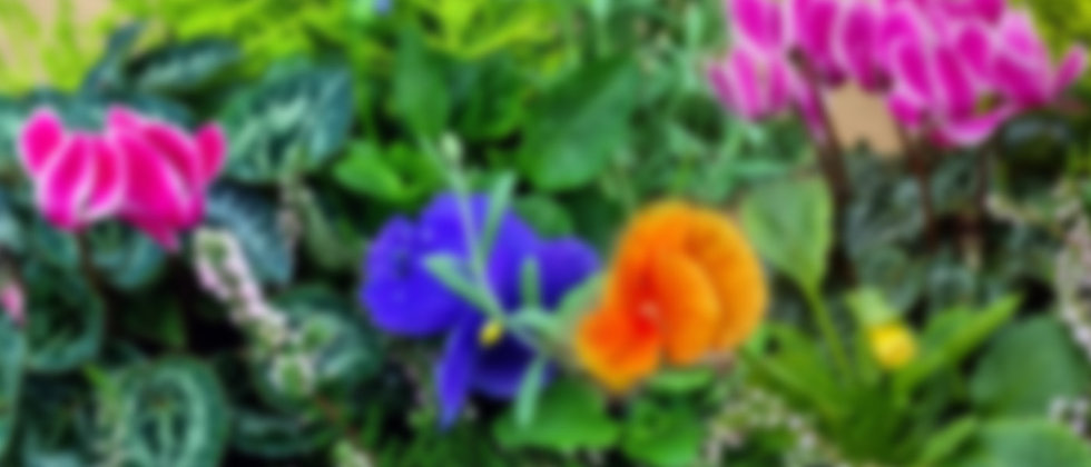 header-pottedplants.jpg