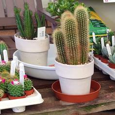 cacti12.jpg