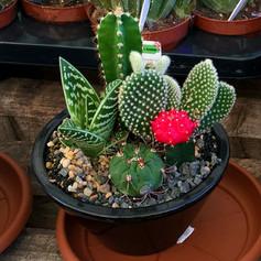 cacti02.jpg