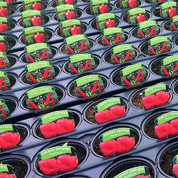 gardenvegetables.jpg