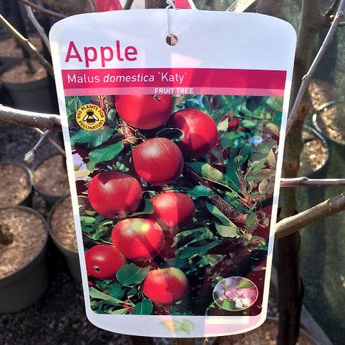 Apple Katy