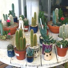 cacti25.jpg