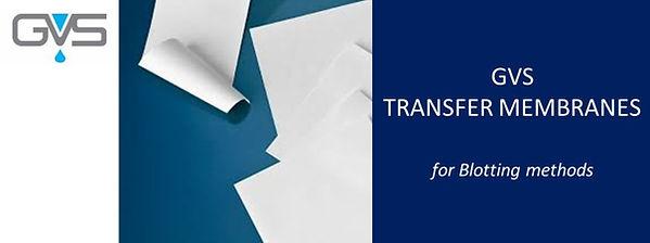 GVS_Transfer_membrane