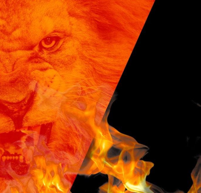 lionfightweb-banner_edited_edited.jpg