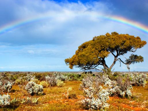 The Rainbow Serpent Myths