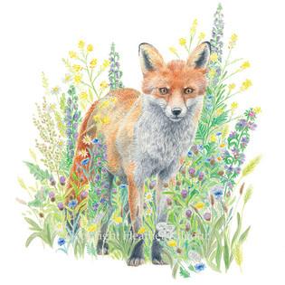 animals-fox.jpg