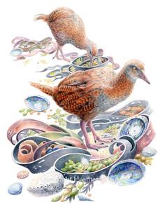 birds-weka.jpg