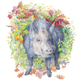 animals-boar.jpg
