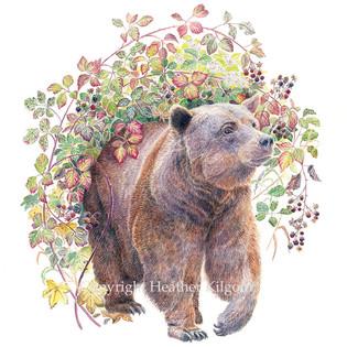 animals-bear.jpg