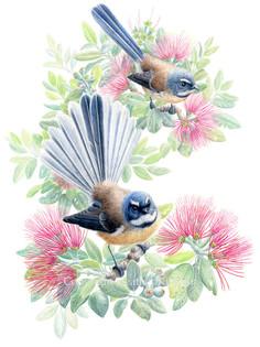 birds-fantail.jpg