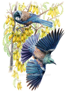 birds-tui.jpg