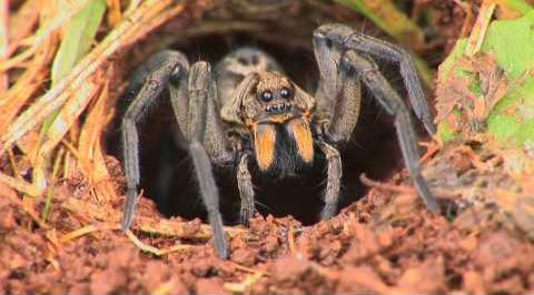 Spider - Arachnophobia - Phobias