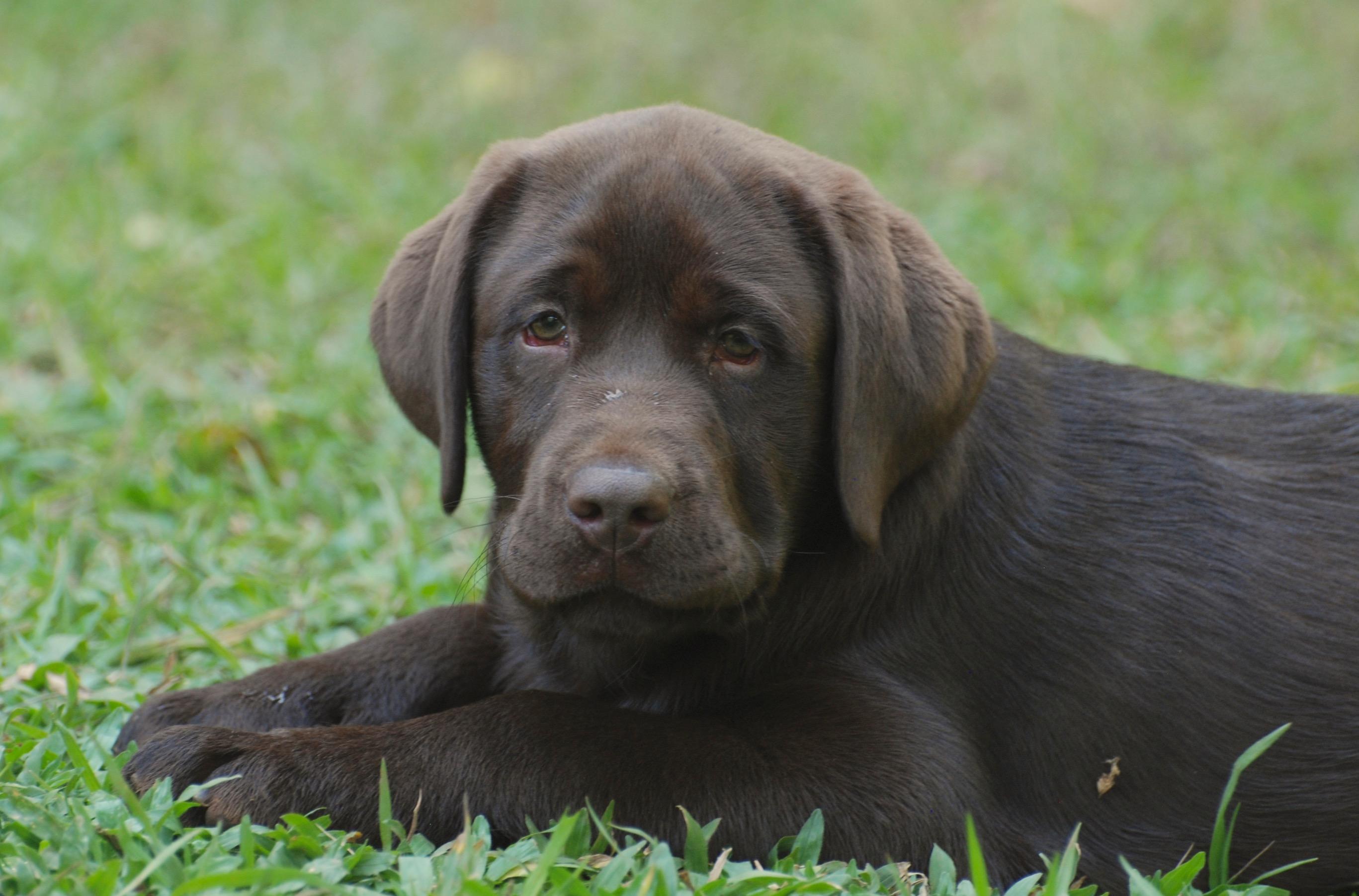 Hank 3 meses