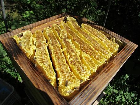 液体のハチミツと結晶化したハチミツの違いは?
