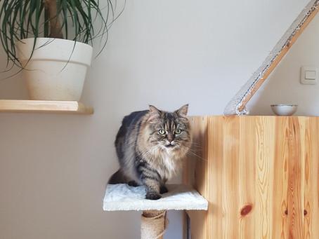 Maak je eigen inloop kattenbak in kast