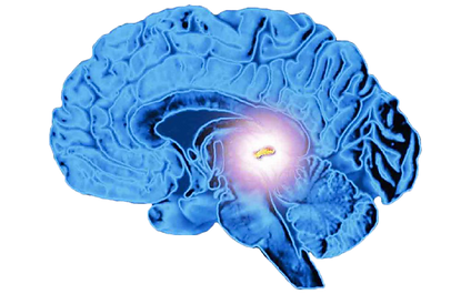 pineal_gland_1280x800-1024x640__1_-remov