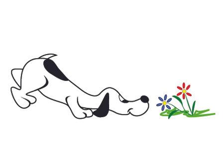 dog summer.jpg