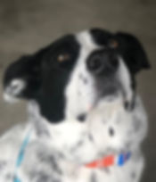 Meet Pepper! Pepper is a 7 year old(best
