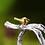 Thumbnail: Bird on Branch