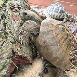 Landschildkröten Haltung