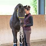 Pferde und Ponies Haltung