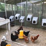 Hühner Haltung