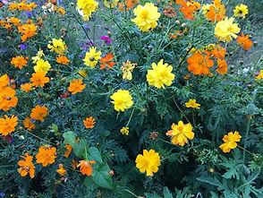 Blumenlinks.jpg