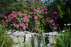 GardenTour_AHP2017-25
