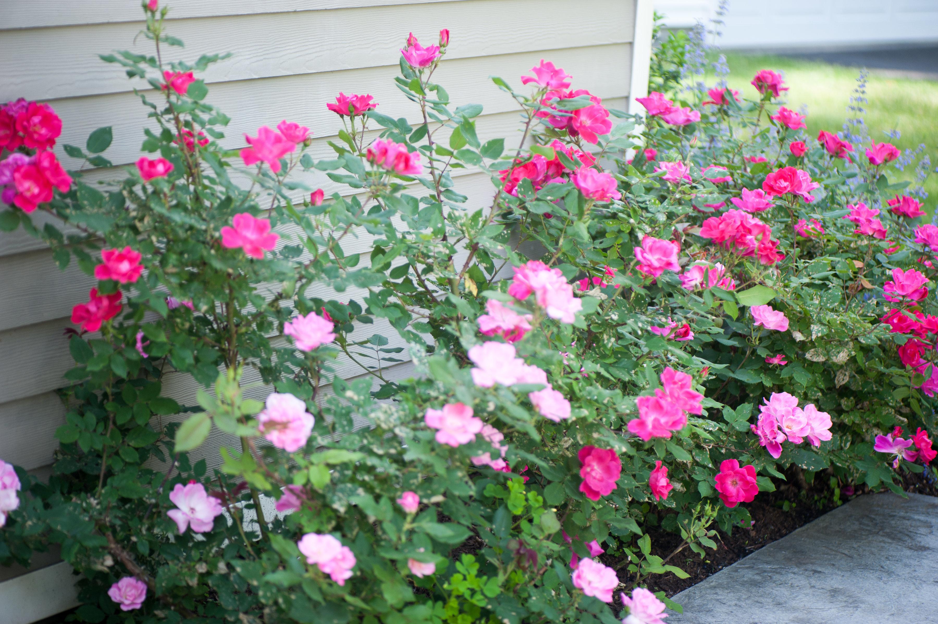 GardenTour_AHP2017-8