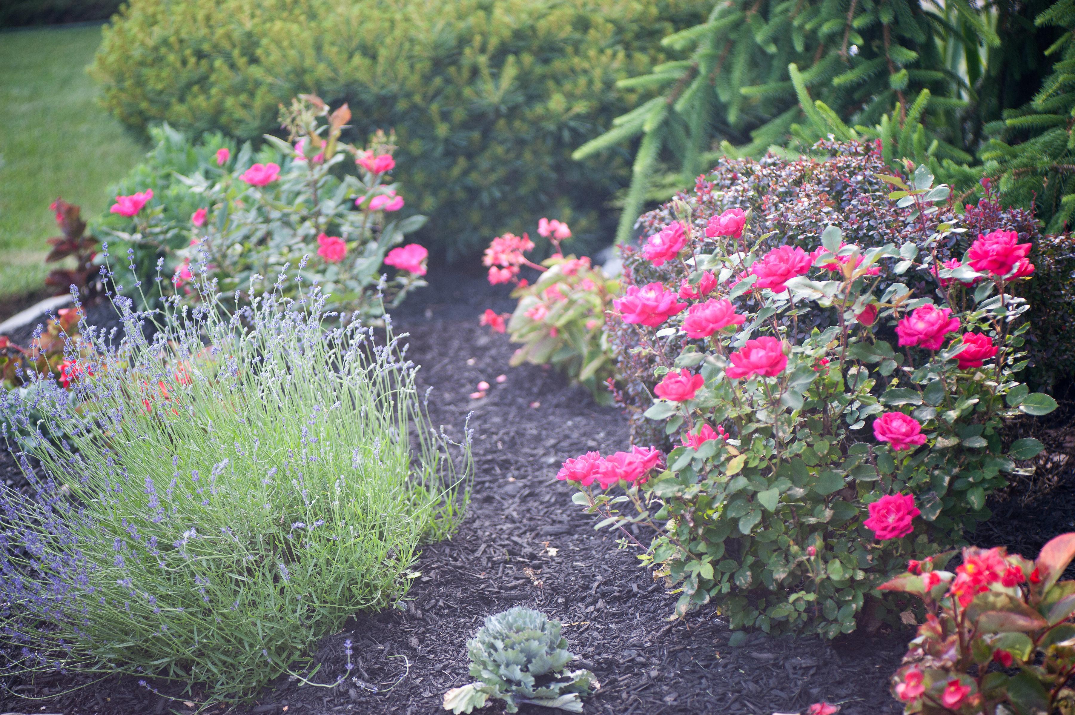 GardenTour_AHP2017-61