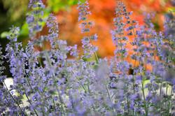 GardenTour_AHP2017-115
