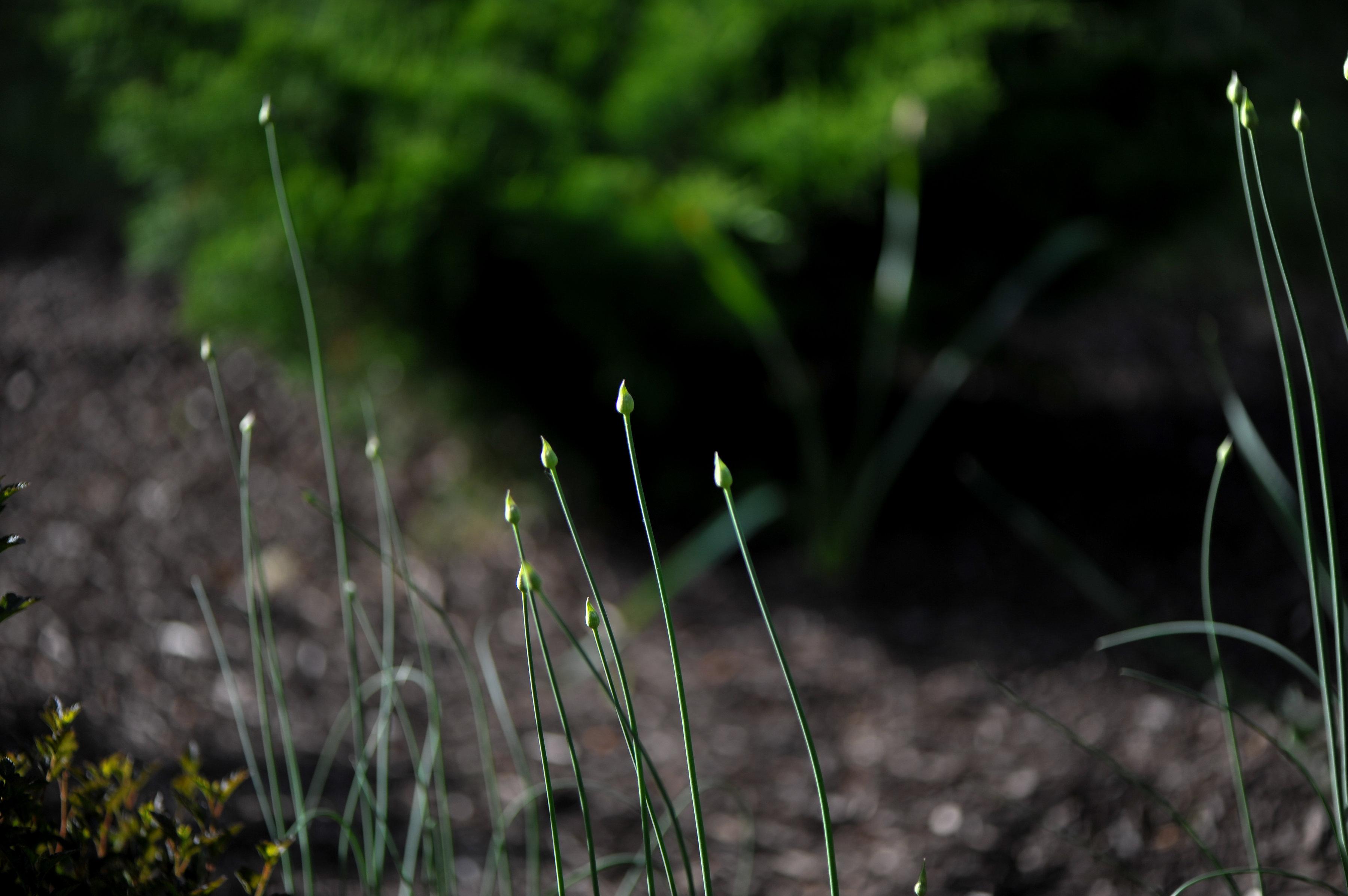 GardenTour_AHP2017-110