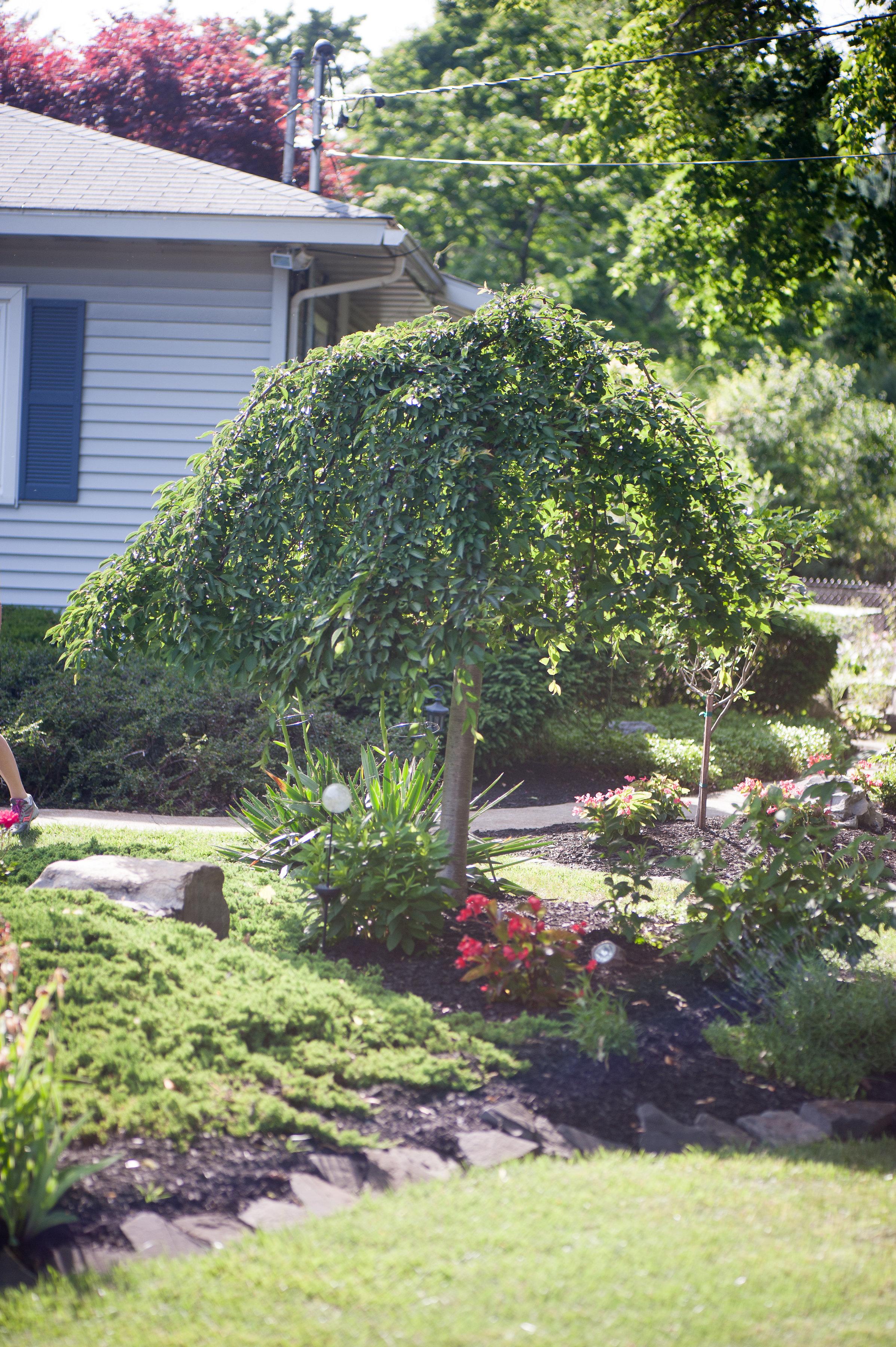 GardenTour_AHP2017-60