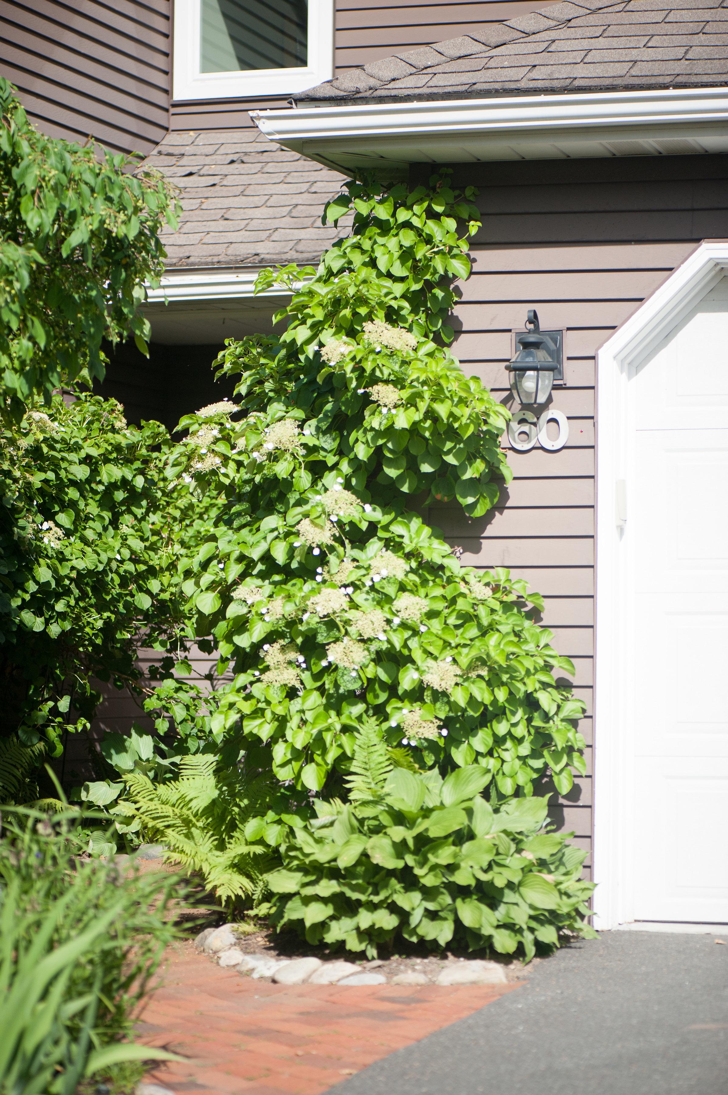 GardenTour_AHP2017-17