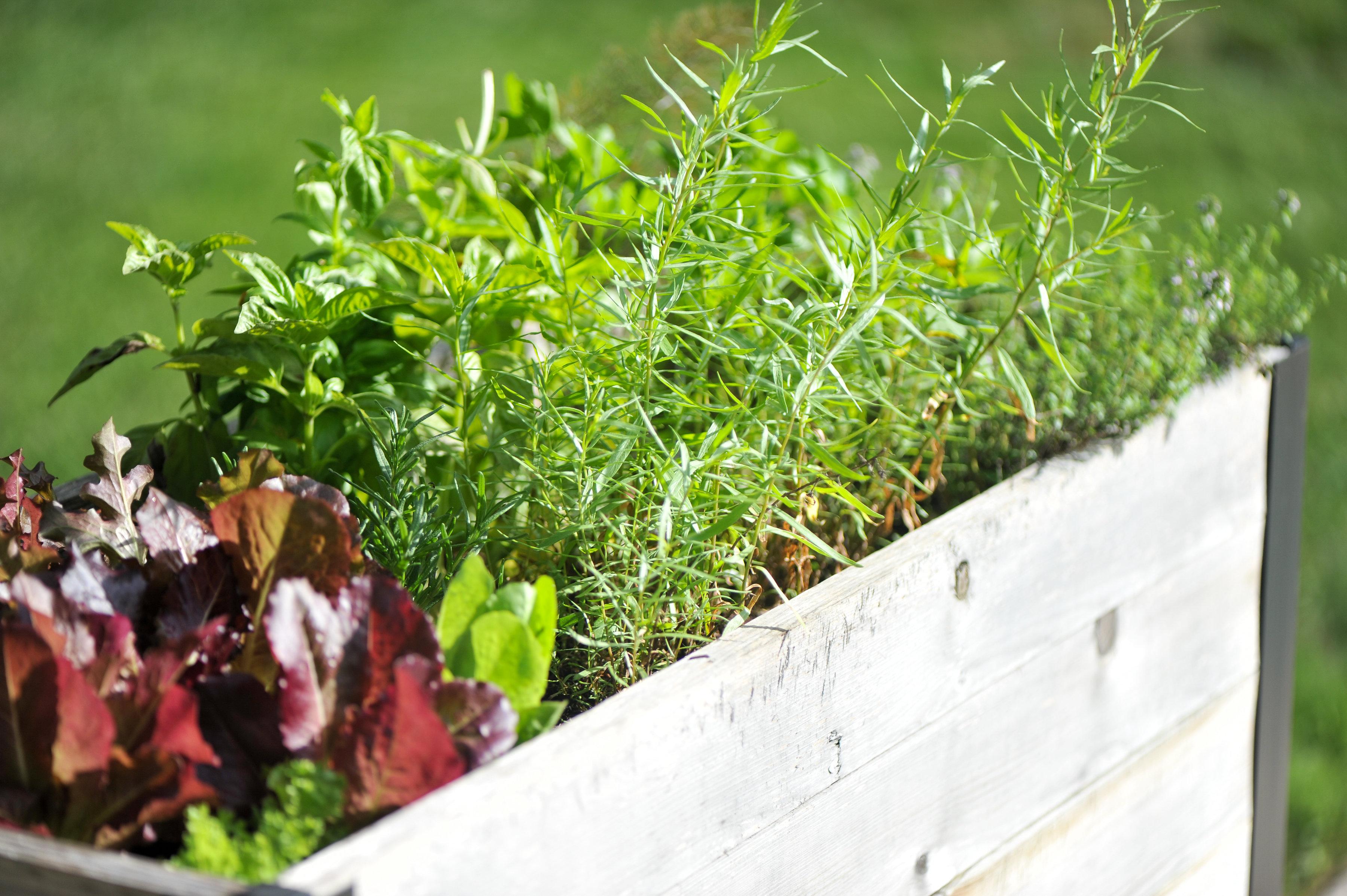 GardenTour_AHP2017-83