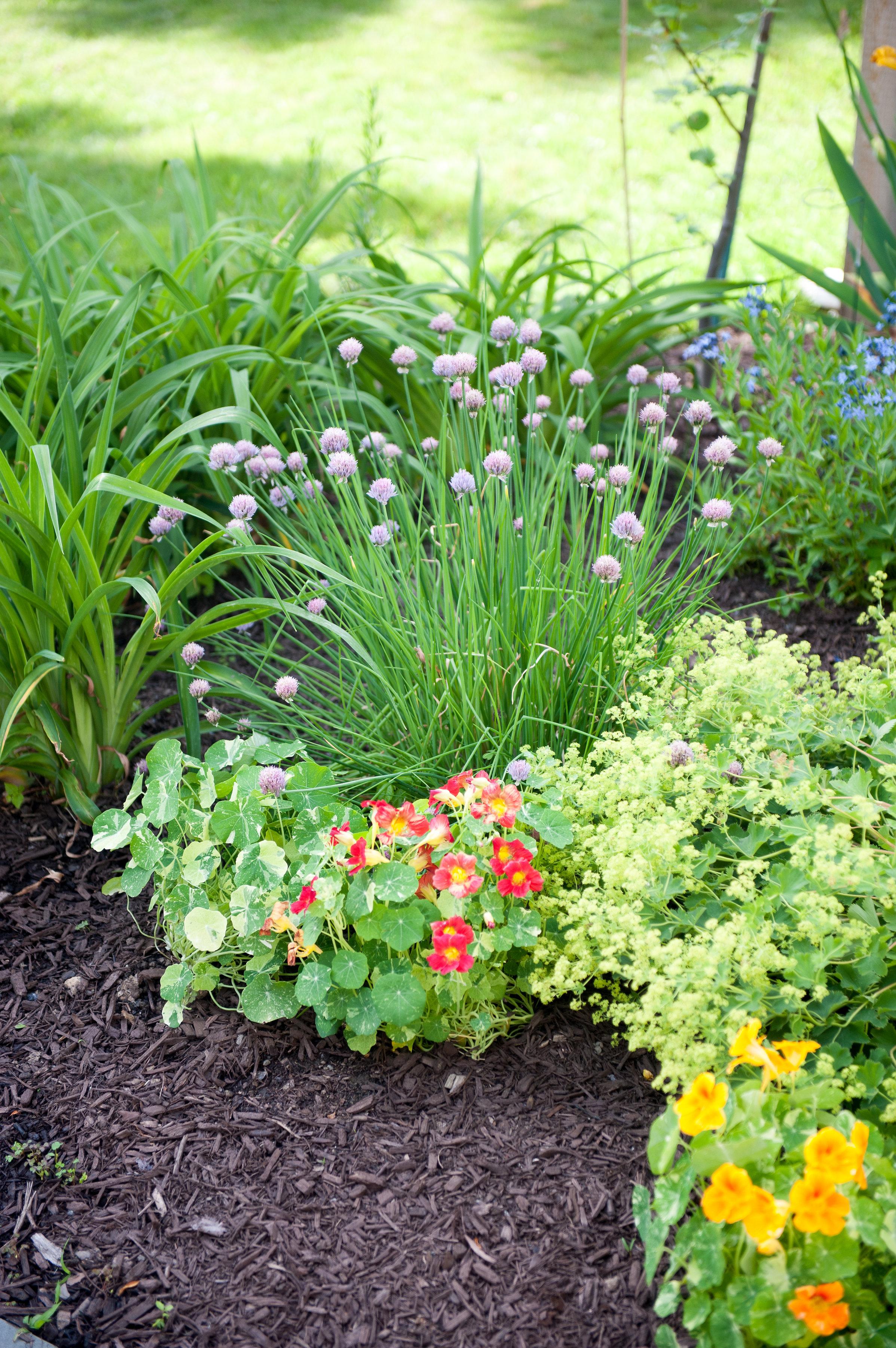 GardenTour_AHP2017-48